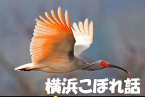 横浜こぼれ話