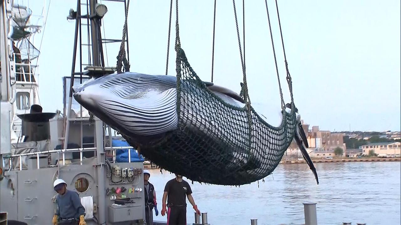 日本は国際捕鯨委員会(IWC)から脱退